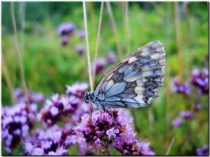 meadow-53551_640
